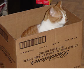 Gracie in a box