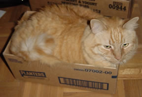 Tig in box