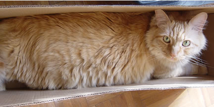 Tig in a box
