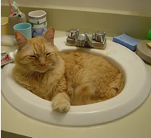 Tig in the bathroom sink