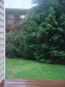 Tree down in Hurricane Irene