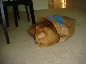 Tigger in a bag
