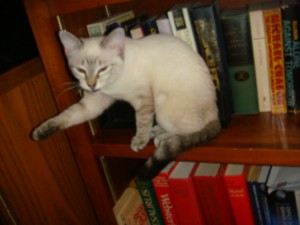 Meimei in the bookshelf
