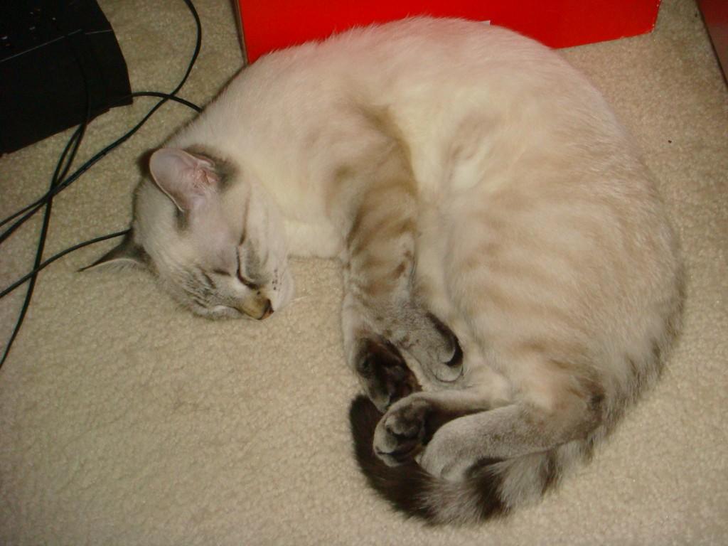 Meimei asleep
